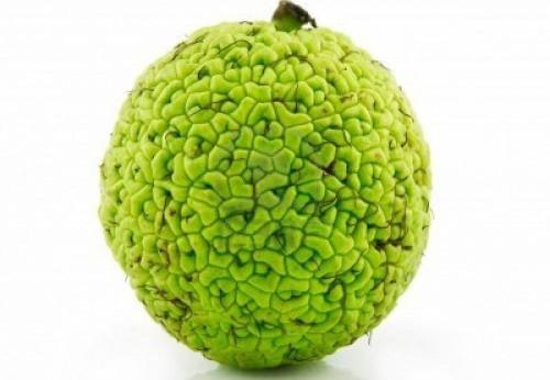 Настойка для суставов из адамова яблока