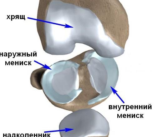 По своему строению колено - достаточно сложный механизм!